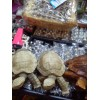 Indonesia Wooden Turtle